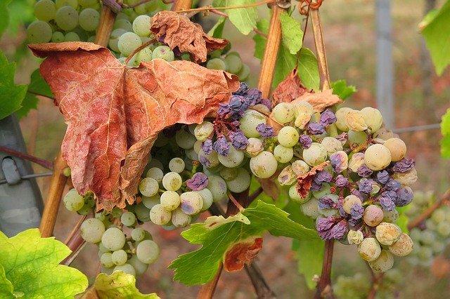 פירות יבשים ותהליכים לייבושם